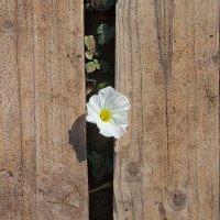 Флора Северного Кипра :: Anna Lipatova