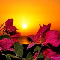 Красоты Египта :: Oksana