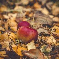 """""""...опали листья в моем саду..."""" :: Александр Вивчарик"""