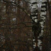 Ноябрь осень!! :: סּﮗRuslan HAIBIKE Sevastyanovסּﮗסּ