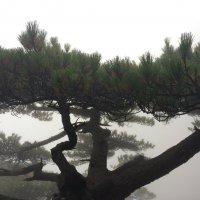 Скоро и его поглотит туман :: Полина Шпак