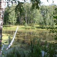 Там на неведомых болотах .... :: Damir Si