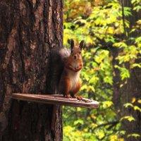 Неужели ты снова орешки забыл принести ? :: Николай Дони