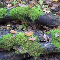 про Осень... :: Gala Sarychev
