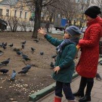 прикормка голубей :: Илья