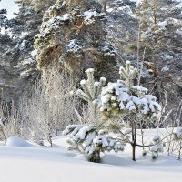 Зимняя сказка :: Дмитрий Конев