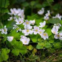 Цветок :: Андрей Иванов