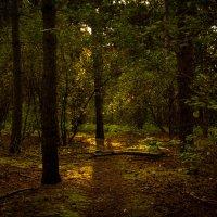свет в лесу :: Alexander Andronik