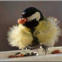 пушистик :: linnud