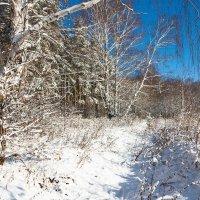 Зима подкралась незаметно :: Любовь Потеряхина