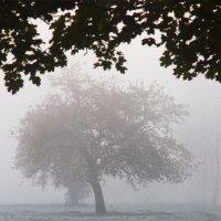 Осень :: Михаил Елфимов