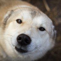 доброта по-собачьи :: Антон Кузевич