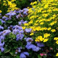 Разноцветье :: Наталия Короткова
