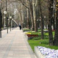 В скверике весеннем :: Константин Николаенко