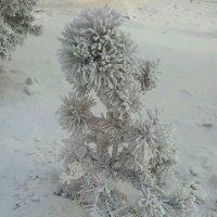 зимняя :: Шухрат Батталов