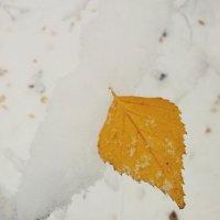 Зима осенью. :: Кристина Кеннетт