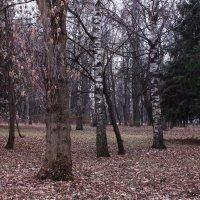 Поздней осени краски :: Татьяна Ломтева