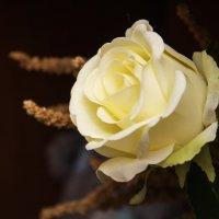 роза :: николай постернак