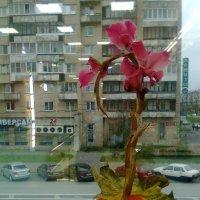 через стекло снято с телефона :: Валентина Папилова