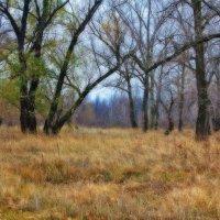 Осенний лес :: Viktor Eremenko