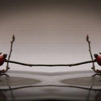 танец :: Оксана Закусилова