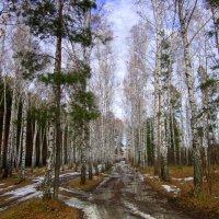 Осенние перемены. :: Мила Бовкун