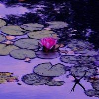Вдохновляясь Клодом Моне:водяные лилиии :: Ирина Сивовол
