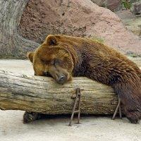 Спи спокойно дорогой товарищ. :: Владимир
