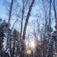 Зима на Алтае :: Константин Молдыбаев