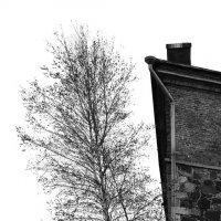 дерево :: Олег К.