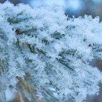 Он вновь пришёл - морозный зимний день :: Галина
