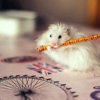 """-""""А когда дел нет я люблю поиграть на флейте"""" )))) :: Павел Голубев"""