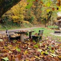 осень в парке :: Olga