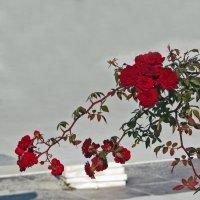 Нежность ноября :: Наталья Джикидзе (Берёзина)