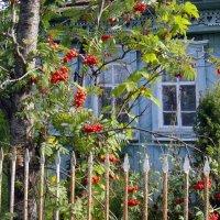 А под окном .кудрявая рябина... :: Елизавета Успенская