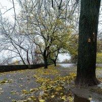 Осень подходит к зиме :: Сергей Волков