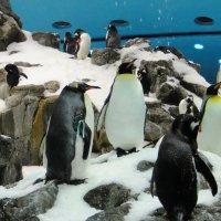 Лоро парк. Павильон «Планета пингвинов» является самым большим в мире. :: Елена Павлова (Смолова)
