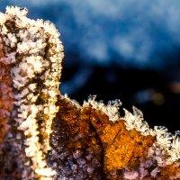 Ледяные кристаллы... :: Viktor Nogovitsin