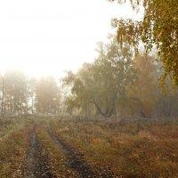 Лесная дорога в тумане. :: Людмила Якимова