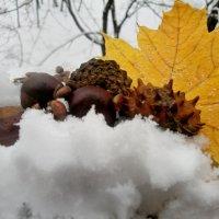 Снежный натюрморт :: Milocs Морозова Людмила