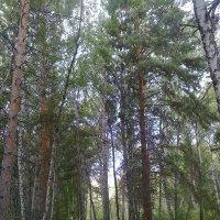 155. В лесу :: Александр
