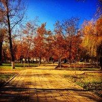 Золотая осень :: Наира Гасанова