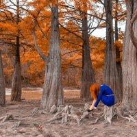 Сказочный лес :: Алексей Яковлев