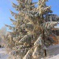Омск зимний :: Savayr