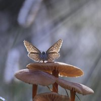 Лесная фея :: Olga Verenich