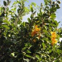 Странные они растения, и плоды и цветы одновременно :: Елена Павлова (Смолова)