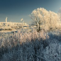 Морозный денек :: fedor zadorognii
