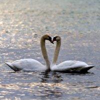 Это любовь :: Геннадий Валеев