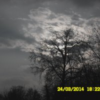 дерево :: Юлия Наимова