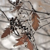 И снова зимние чудеса :: Нина Алексеева